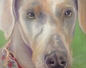 Custom Small Dog Portraits