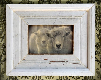 On Reserve. Sheep Head. Farm. Original Encaustic Mixed Media Art. Original Digital Photograph. Wall Art. Wall Decor. WOOLY by Mikel Robinson