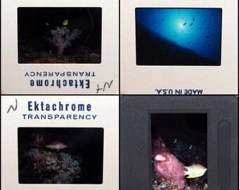 32 vintage photo slides - Ocean Life - Underwater - 35mm slides - fish - sea - vintage slides