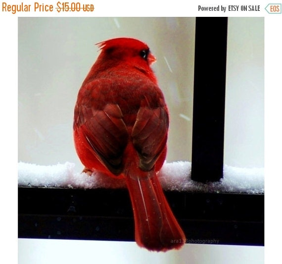 40% OFF SALE Red Wall Decor, Bird, Nature Picture, Cardinal Photograph, Winter, Holiday- 5x5 inch Print - Cardinal in the Snow
