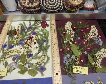 Choose your Real Pressed Flower Assortments Grown in Alaska 328 FL