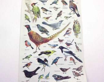 Gorgeous Color Book Plate of Birds with French Descriptions