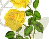 Vintage Illustration Flower Rose Digital Graphic Printable Clip Art Image Download Botanical
