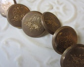 Vintage Buttons - 6 heavy weight etched design horn of plenty/ Cornucopia signed back, Superfine, Kendrick & co. very old (oct28b)