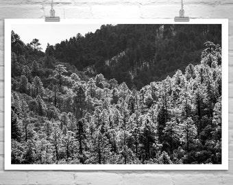 Forest Photography, Santa Rita Mountains, Black and White, Landscape Art, Tree Art, Mountain Art, Madera Canyon, Murray Bolesta, Wall Art
