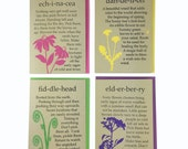 4 Pack of Blank Nature Cards Echinacea Fiddlehead Dandelion Elderberry Recycled Paper Compostable Plastic Environmentally Friendly