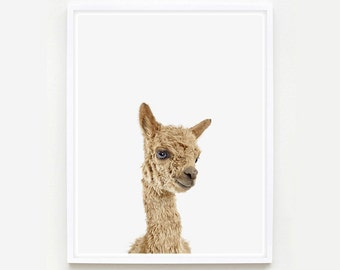 Baby Animal Nursery Art Print. Baby Alpaca Little Darling. Farm Animal Wall Art. Animal Nursery Decor. Baby Animal Photo.