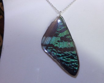 REAL Butterfly Wing Necklace THICK & SOLID
