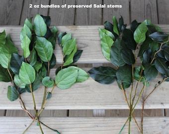 Salal Leaves-Lemon Leaves preserved-Natural green or Olive green color-Choose from 2 oz or 4 oz bunch-Wedding leaves