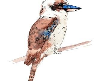 Australian Kookaburra - Art Print