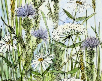 Flower Illustration Watercolor Thistles Daisies Queen Anne Lace