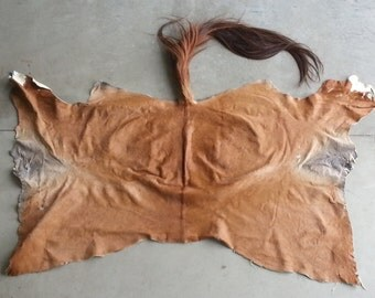 Red Sorrel Horse Half Hide-  Soft tanned- Lot No. 24601Y