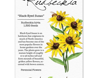 Black-Eyed Susan Seeds (Rudbeckia hirta) Open Pollinated Seeds by Seed Needs