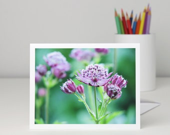 Purple flowers with dewdrops photography note card, Astrantia floral photo notecard, all-occasion blank greeting card stationery, a2 or a7