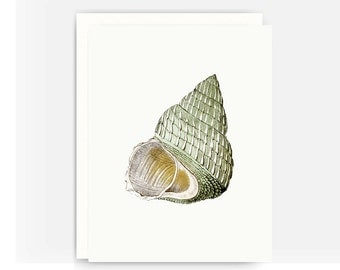Set of 4 Nautical Greeting Cards, Vintage Sea Shell Cards, Blank Greeting Cards, Note Cards A2