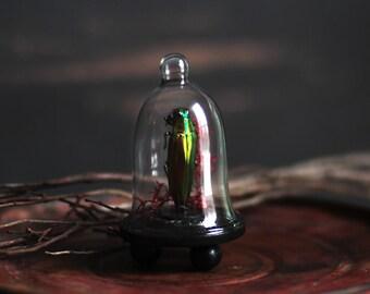 Moss & Beetle Miniature Curio