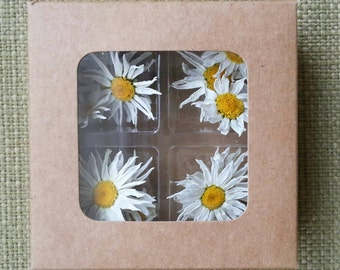 12 Small Dried Daisies, White Daisy, Flowers, Craft Supplies,  Daisies, White, Wedding, Dried Flowers, Wedding Confetti, Jewelry Flowers