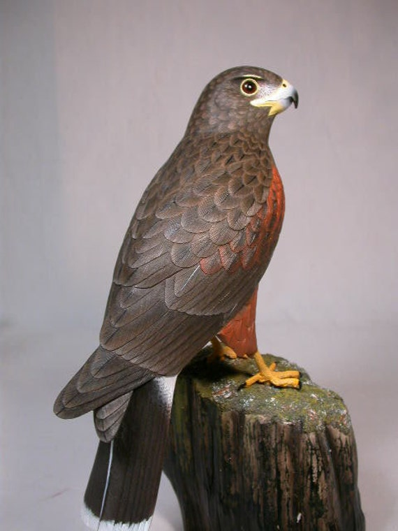 Harris s hawk hand carved wooden bird carving