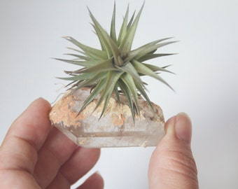 Air Plant Crystal Garden, Real Raw Quartz Point, Unique Airplant Display, Gift For Boho Friend, Sister, Under 30, Little Something