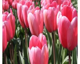 Pink Tulips Fabric Panel 9 x 9