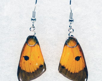 Real Butterfly Earrings - Clouded Sulphur - Hand Cast Resin