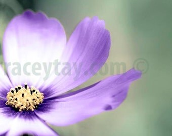Flower Photography, Purple, Mint Green, Girl Nursery Decor, Pastel, Bedroom Wall Art, Mint Purple, Pastel Decor