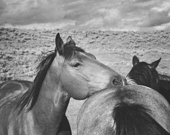 Western Horse Photography in Black and White