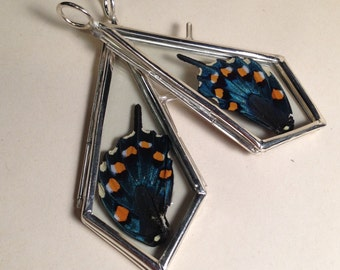 LAST ONE - Day Dreams: Real Dry Preserved Pipevine Swallowtail Butterfly Wing Framed in Glass Teardrop Pendant Necklace