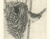 Marsh Wren Nest Fine Art Etching