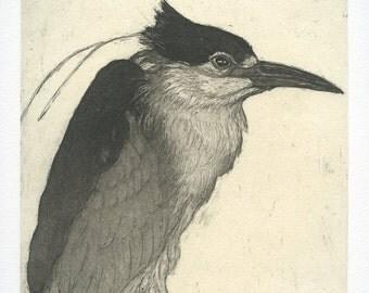 NIght Heron, Original Fine Art Etching