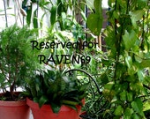 RESERVED for RAVEN69. 6 Conditioner Leave In. Scented, Fragrant, Vegan, Natural. Custom made. Olivia Morgana.