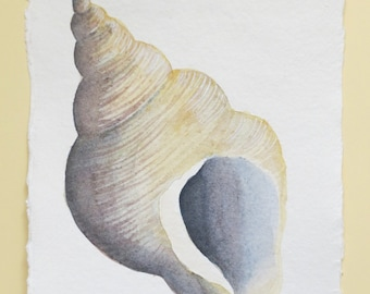 Original watercolour sea shell illustration painting ocean beach series