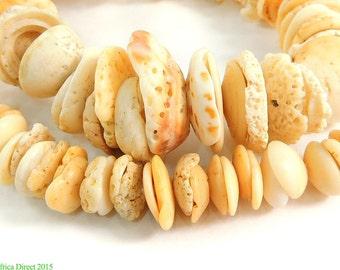 Conus Shell Beads Matched Mauritanian Graduated Africa 97529