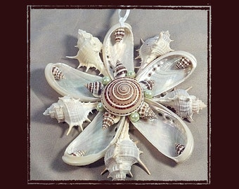 "Sea Shell Keepsake Ornament Accent #141 (Size 6""), Beach/Nautical/Coastal Decor, Keepsake Ornament/Wall Accent"