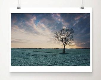 winter frost photograph tree photograph sunrise photograph nature photography landscape photograph green home decor tree print
