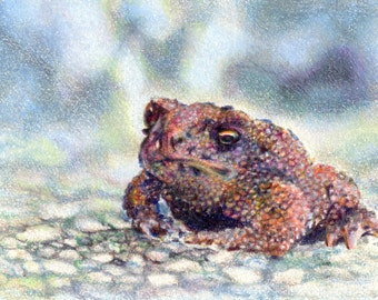 "Original ACEO - Toad - 2.5"" x 3.5"" Unique Artwork - Free Shipping - Portion of Proceeds to Charity"