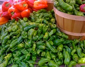 Shishito Peppers Exquisite Open Pollinated Variety from Japan Mild Roasting Pepper Grown to Organic Standards Rare Seeds