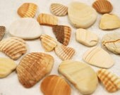 20 smooth colorful clam and cockle shell pieces (no.29)