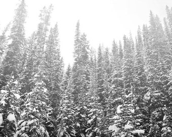 Woodland Forest Photography Print 11x14 Fine Art Banff Canada Pine Trees Snow Wilderness Winter Landscape Photography Print.