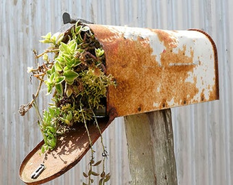 Rustic Mailbox Photography, Garden Photography, Still Life
