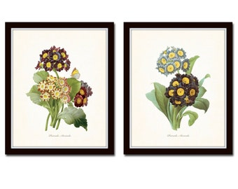 Antique Primrose Print Set No.5, Botanical Prints, Botanical Art, Giclee,Redoute Flowers, Vintage Botanicals, Wall Art, Flower Prints