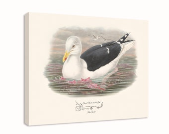 """Canvas Print - Great Black-backed Gull by John Gould (1804-1881) - 16"""" x 20"""" - On Stretched Canvas"""