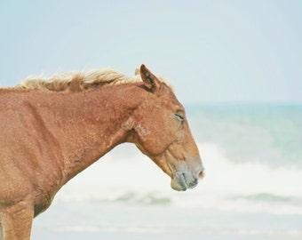 Beach Horse Photography | Wild Horse Outer Banks Beach | Beach House Wall Art Print | Coastal Home Decor Wall Art | Equine Decor Art Print