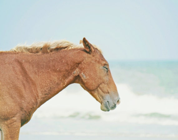 Beach Horse Photography | Wild Horse Outer Banks Beach | Beach House Wall Art Print | Coastal Home Decor Wall Art | Equine Decor Art Print