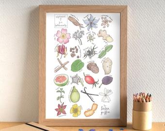 Gin Alphabet Print - Gin Art - Gin Botanicals Print - Kitchen Art - Kitchen Print - gift for gin lover - gin gift - Alphabet of Gin