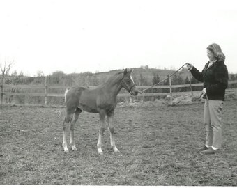 "Vintage Snapshot ""Future Champion"" Baby Horse Foal Colt Filly Horse Trainer Found Vernacular Photo"