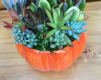 Succulents Pumpkin Centerpieces, Pumpkin With Succulents Fall Wedding Centerpiece, Fall Succulent Centerpiece  Tabletop  Pumpkin Centerpiece