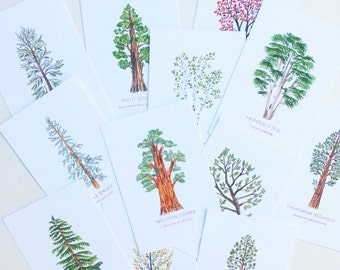 North American Trees 4x6 Postcards (12 pack)