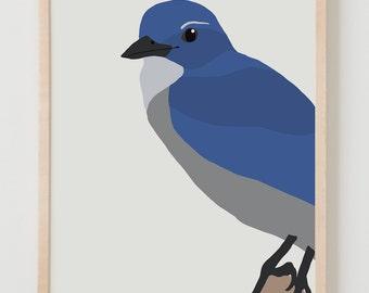 Fine Art Print. Blue Jay. September 10, 2014.