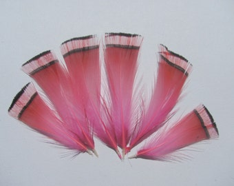 6 Golden Pheasant Tippet Feathers - Dyed Pink
